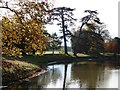 SO8744 : Cedar of Lebanon trees in Croome Park by Philip Halling