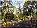 SJ8846 : Hanley Park by Jonathan Hutchins