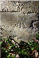 SY4491 : Benchmark at entrance to 'Seabreeze', Mount Lane by Roger Templeman