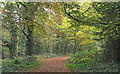 TQ4791 : Path in Hainault Lodge Nature Reserve by Roger Jones