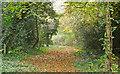 TQ4791 : Hainault Lodge Nature Reserve path by Roger Jones