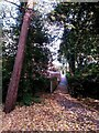 SZ0791 : Bournemouth: looking up footpath B02 from the Gardens by Chris Downer