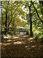 TL2015 : Bridleway to Codicote Road through Stocking Springs Wood by Adrian Cable