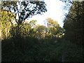 TF0876 : Newball Wood by Jonathan Thacker