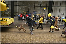 TQ3281 : View of dogs in the Dogs Trust section of the Lord Mayor's Parade from Gresham Street by Robert Lamb