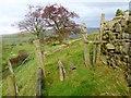 NY6142 : Stile near Busk by Oliver Dixon