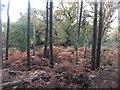 SD4582 : Autumn on Ulpha Fell by David Brown