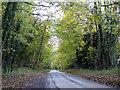 SP4622 : Lane through woodland by Robin Webster
