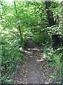 ST5574 : Leigh Woods  [17] by Michael Dibb