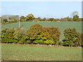 SP4422 : Hedgerow trees by Robin Webster