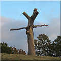 TQ5192 : Dead tree in Bedfords Park, Havering-atte-Bower by Roger Jones