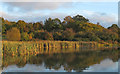 TQ5191 : View from Bedfords Lake, Bedfords Park, Havering-atte-Bower by Roger Jones