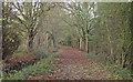 TQ5291 : Bridleway in Bedfords Park, Havering-atte-Bower by Roger Jones