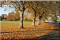 SK3833 : The National Field on Elvaston Lane, Alvaston, Derby by John Blaylock