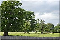 TQ5446 : Hall Place Park by N Chadwick