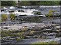 SJ2142 : The River Dee in Llangollen, Denbighshire by Roger  Kidd