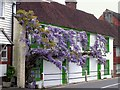 TQ7416 : Wisteria in flower by Patrick Roper