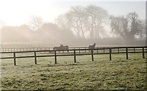 ST8180 : Horses in the Mist !! Acton Turville, Gloucestershire 2014 by Ray Bird
