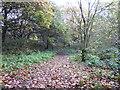 SJ8350 : Footpath in Bradwell Woods by Jonathan Hutchins