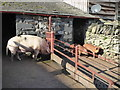 SD3285 : Old Hall Farm - piggies with satellite TV by Chris Allen
