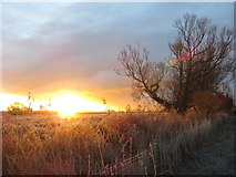 ST4286 : Sun rise at Magor Marsh by Gareth James