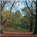 ST3087 : A carpet of beech leaves in Belle Vue Park by Robin Drayton