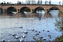 SO8454 : River Severn at Worcester Bridge by David Martin