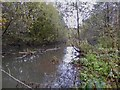 SJ8450 : Pool near the bottom of Bradwell Woods by Jonathan Hutchins