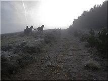 S8358 : Startled Horses by kevin higgins