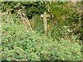 SN0314 : A walk to Slebech Old Church 6 by Humphrey Bolton