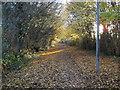 TF1604 : Autumn leaves on Serjeant Way, Werrington by Paul Bryan