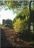 SX9065 : Path to the chapel by Derek Harper