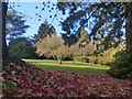 ST3087 : A carpet of liquid amber leaves in Belle Vue Park by Robin Drayton