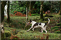 SD1399 : Eskdale and Ennerdale Foxhounds by Peter Trimming