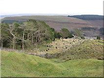 SO1004 : Cemetery above Pentwyn by Gareth James