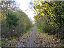 SZ0995 : Path up from the river by Robin Webster