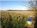 SU8188 : Path to Chisbridge Farm by Des Blenkinsopp