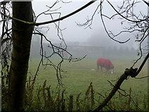H4965 : Horse, Raw by Kenneth  Allen
