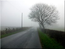 H4965 : Misty at Moylagh by Kenneth  Allen
