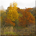 TQ3997 : Autumn colours in Trueloves, Epping Forest by Roger Jones