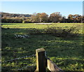 ST1573 : Towards a flock of sheep in a  Michaelston-le-Pit field by Jaggery