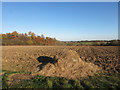 SU8187 : Ploughed Field, Lower Woodend by Des Blenkinsopp