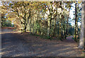 SJ5470 : Delamere Forest by Stephen McKay