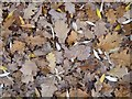 SO8742 : A carpet of oak leaves by Philip Halling
