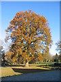 SP2979 : Oak by Honeybourne Close, Nod Rise by E Gammie