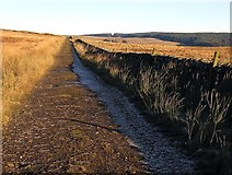 NY5776 : Track near Grey Hill by Andrew Curtis