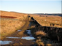 NY5775 : Track near The Pike by Andrew Curtis