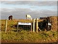 H3173 : Animals grazing, Drumscra by Kenneth  Allen