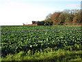 TF0777 : Woodlands Farm by Jonathan Thacker