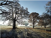 SO8844 : Backlit trees on a frosty morning by Philip Halling
